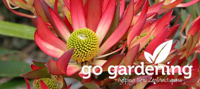 Go Gardening this Autumn
