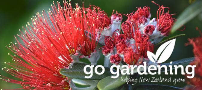 Go Gardening this Christmas