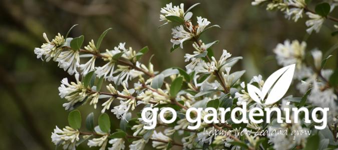 Go Gardening this July
