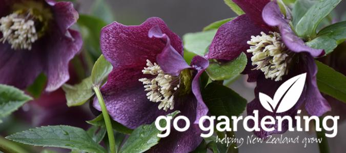 Go Gardening this August