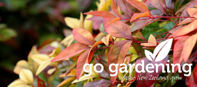Go Gardening this June - Nandina