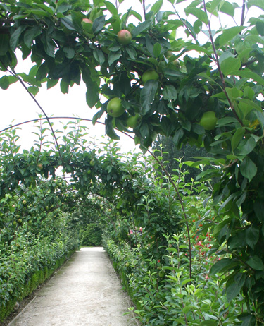 Apple arch Heligan