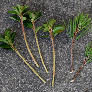 Grow new plants from cuttings
