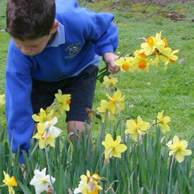 Kids Go Gardening - spring flowering bulbs