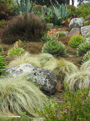 Nz Grasses For Landscaping Go gardening helping new zealand grow garden inspiration tips aloe polyphylla with carex frosted curls and coprosma goundcovers at larnach castle workwithnaturefo