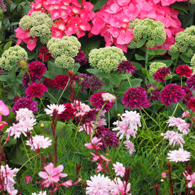 Go gardening helping new zealand grow garden inspiration tips theres no season like spring to inspire the gardener thats in all of us nows the time to create a flower garden that will bring out the mightylinksfo