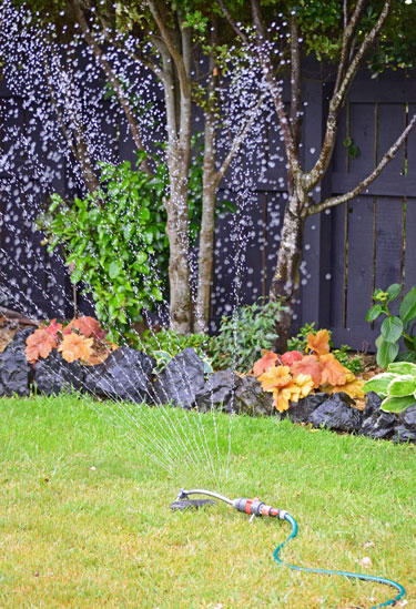 Check out what water restrictions may apply in your area.