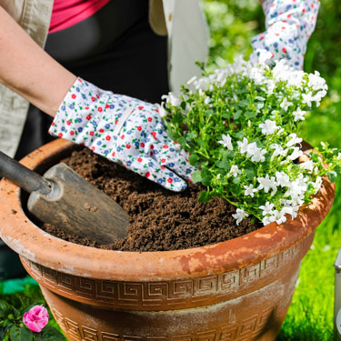 Simple steps you can take to make gardening safer - image credit shutterstock.com/JariHindstroem