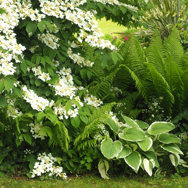 Go Gardening Helping New Zealand Grow Garden Inspiration Tips And Advice From The Expert